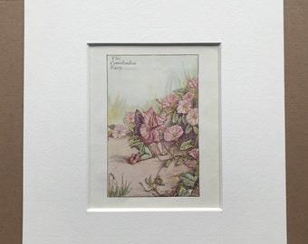 1936 The Convolvulus Fairy Original Vintage Print - Flower Fairy - Cicely Mary Barker - Mounted and Matted - Available Framed