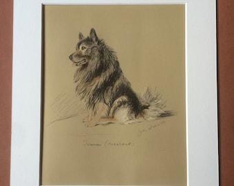 1937 Keeshond Original Vintage Dog Illustration - Lucy Dawson - Animal Art - Dog Drawing - Framed Art - Dog Lover Gift Idea