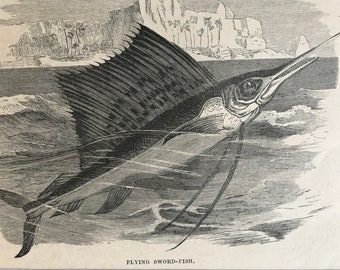 1896 Flying Sword-Fish Original Antique Print - Fish Illustration - Marine Decor - Mounted and Matted - Available Framed