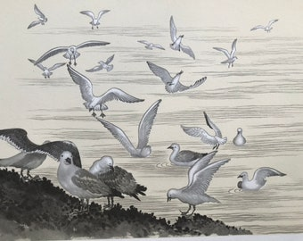 1939 Seagulls Original Vintage Illustration by Chiang Yee - Bird Art - Ornithology - Nature - Wildlife - Available Matted and Framed