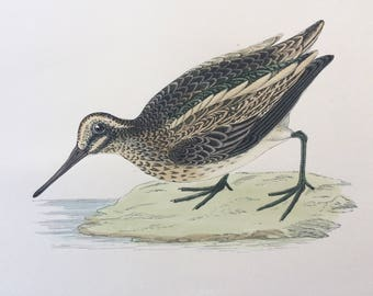 1903 Jack Snipe Original Antique Matted Hand-Coloured Engraving - Ornithology - Available Framed - Wildlife - Decorative Art