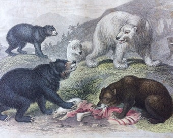 1852 Original Antique Hand-Coloured Engraving - Grisly Bear, European Brown Bear, American Black and Polar Bear - Natural History - Zoology