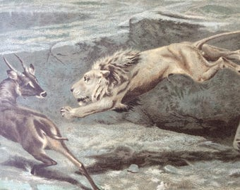 Lion hunting   Etsy