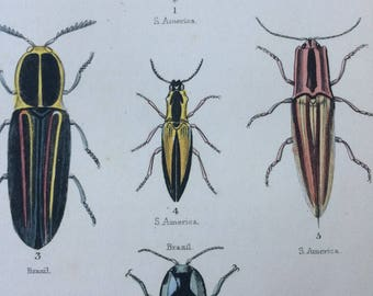 1845 Original Antique Hand-Coloured Steel Engraving - Coleoptera - Jardine - Entomology - Insect - Beetles - Bugs - Decorative Art
