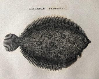 1812 Smeardab Flounder Original Antique Engraving - Ichthyology - Fish Art - Fishing Cabin Decor - Available Framed