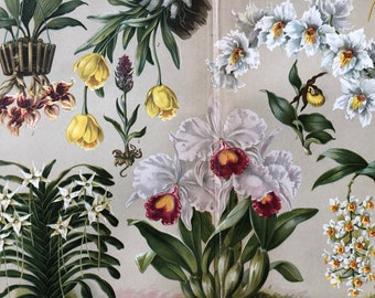 1904 Original Antique Lithograph - Orchids - Botanical Decor - Botany - Vintage Wall Art - Victorian Wall Decor
