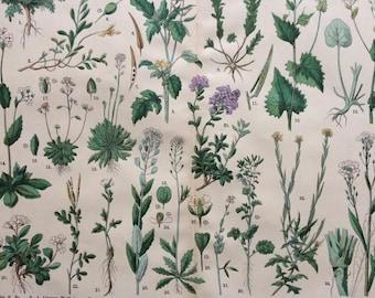 1890 Large Original Antique Botanical Lithograph - Botanical Print - Botany - Plants - Botanical Art - Wall Decor - Herbs - Hedge Mustard