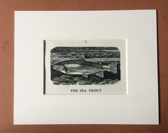 1958 The Sea Trout Original Vintage Print - Mounted and Matted - Fish - Angling - Fishing - Cabin Decor - Available Framed