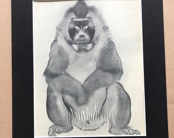 1937 Male Drill Monkey Original Vintage Print - Mounted and Matted - Available Framed - Monkey - Primate - Natural History