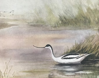 1924 Avocet Original Antique Print - Mounted and Matted - Ornithology - British Waders - Vintage Bird Art - Available Framed