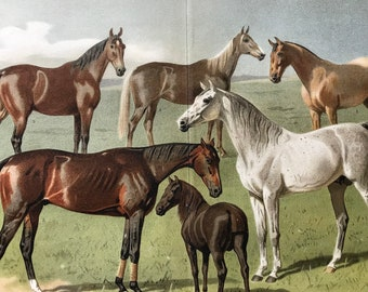 1896 Horses Large Original Antique Lithograph - Available Mounted and Matted - Equine Decor - Animal Art - Vintage Wall Decor