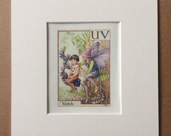Vetch 1930s Flower Fairy Alphabet Original Vintage Print - Cicely Mary Barker - 8 x 10 inches - Matted & Available Framed