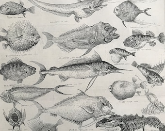 1883 Odd Fish at the International Fisheries Exhibition Original Antique Engraving by Louis Wain - Mounted and Matted - Ichthyology