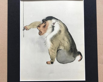 1937 Pigtail Monkey Original Vintage Print - Mounted and Matted - Available Framed - Monkey - Primate - Natural History