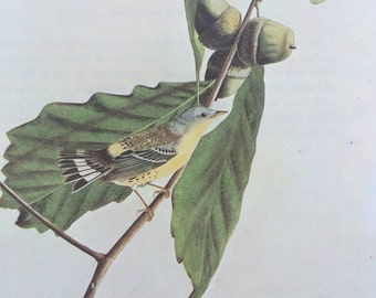 MAGNOLIA WARBLER Original Vintage 1966 Audubon Print, Matted and Available Framed 14 x 11 inches, Bird Decor, Ornithology