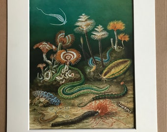 1968 Colourful Vintage Marine Wildlife Print - Plankton - Sea Mouse - Tubeworm - matted and ready to frame  14 x 11 inches - Marine Wildlife