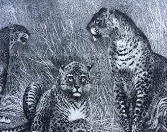 1885 Leopards at Home Original Antique Engraving - matted & ready to frame - Big Cat - Wildlife Decor