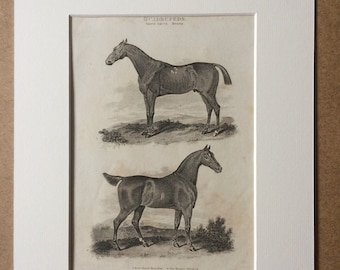 1819 Race Horse Royalist and The Hunter Skylark Original Antique Engraving - Horse - Equine Decor - Horse Breeds - Horse Racing - Framed