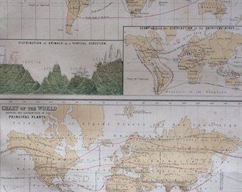 1859 ZOOLOGY and BOTANY large rare original antique A & C Black World Maps with inset maps and engravings