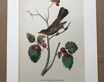 1937 Townsend's Solitaire Original Vintage Audubon Print - Mounted and Matted - Available Framed - Bird Art - Ornithology