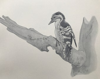 1937 Lesser Spotted Woodpecker Original Vintage Print - Bird Art - Ornithology - Mounted and Matted - Available Framed