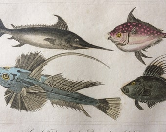 1821 Original Antique Hand-Coloured Engraving - Sword Fish, Opah, Dragonet, John Doree - Fish Print - Decorative Art - Available Framed