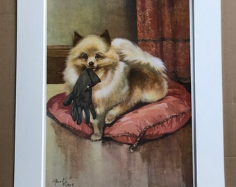1926 Pomeranian Original Antique Albert Kaye Print - Dog Print - Mounted and Matted - Available Framed