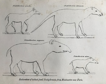 1858 Original Antique Engraving - Restoration of extinct fossil Pachydermata from Montmartre - Geology - Fossil - Palaeontology