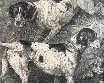 1896 Pointers Original Antique Print - Dog - Canine Decor - Natural History - Mounted and Matted - Available Framed