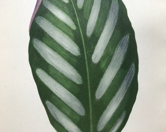 1872 Original Antique Hand Coloured Botanical Illustration - Botany - Beautiful Leaved Plant - Maranta Porteana - Available Matted & Framed