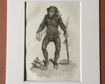 1800 Black Orang-utan Original Antique Engraving - Zoology - Natural History - Primate - Available Framed