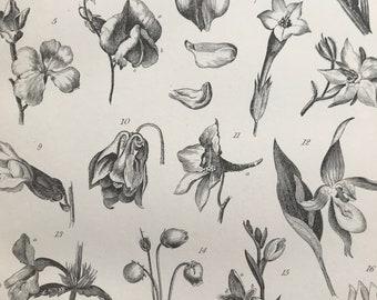 1891 Corolla Original Antique Print - Flower - Petal - Botanical Decor - Botany - Available Framed