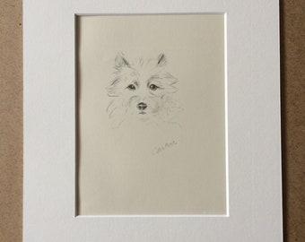 1946 Original Vintage Dog Illustration - Cairn Terrier - Lucy Dawson - Animal Art - Dog Drawing - Decorative Wall Art - Framed Art