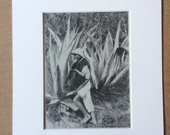1940s Pulque - The National Beverage of the Mexicans Original Vintage Print - Mounted and Matted - Mexico - Available Framed