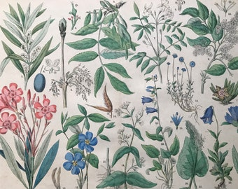 1880 Large Original Antique Botanical Lithograph - Botanical Print - Botany - Plants - Botanical Art - Wall Decor - Campanula - Jasmine