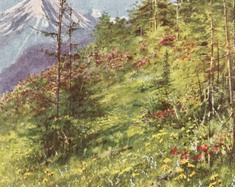 1917 An Alpine Meadow in Bloom Original Antique Print - Mounted and Matted - Available Framed - Switzerland