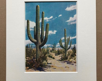 1940s Giant Cactus Original Vintage Print - Mounted and Matted - Cacti - Desert - Available Framed
