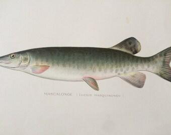 Fish & Reptiles