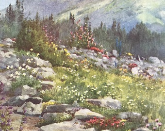 1917 An Alpine Garden at Bourg St. Pierre Original Antique Print - Mounted and Matted - Available Framed - Switzerland