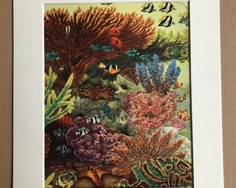 1968 Vintage Tropical Fish Print - Available Framed - 14 x 11 inches - Marine Wildlife Wall Decor - Coral Reef - Starfish - Sea Urchin