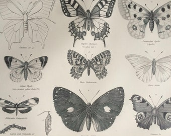 1875 Butterflies Original Antique Matted Engraving - Lepidoptera - Butterfly - Insect - Entomology - Matted & Available Framed