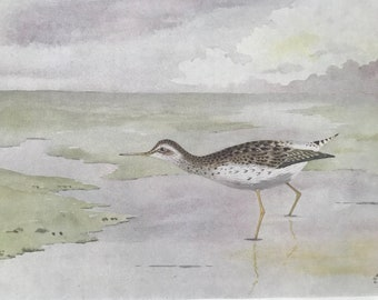 1924 Wood Sandpiper Original Antique Print - Mounted and Matted - Ornithology - British Waders - Vintage Bird Art - Available Framed
