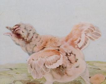 1919 The Capercailzie - Beautiful Baby Bird Illustration by Edmund J. Detmold - Ornithology - Bird Art - Wall Decor - Nature Decor