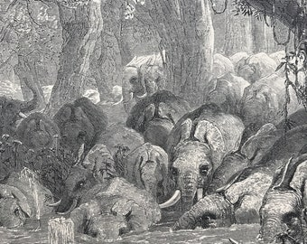 1893 The Haunt of the African Elephant Original Antique Print - Wildlife - Natural History - Mounted and Matted - Available Framed