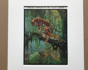 1940s Stealthy Prowlers of the Amazon Forests Original Vintage Print - Mounted and Matted - Wildlife - Jaguar - Available Framed