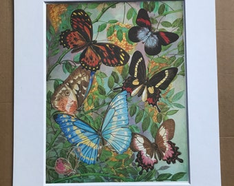 1984 Diurnal Butterflies of South America Original Vintage Print - Butterfly Insect Art - Mounted and Matted - Available Framed