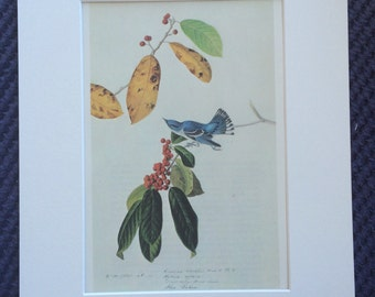 Cerulean Warbler Original Vintage 1966 Audubon Print, Matted and Ready to Frame 14 x 11 inches, Bird Decor, Ornithology