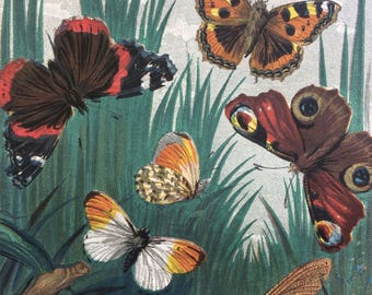 1859 Original Antique Lithograph - Butterflies & Moths - Vivid Colours - wall decor - home decor - Entomology - Insects - Butterfly