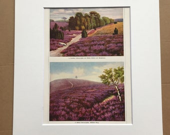 1924 Heathland Landscapes Original Antique Lithograph - Heather - Botanical Decor - Mounted and Matted - Available Framed