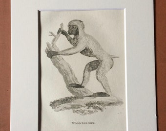 1800 Wood Baboon Original Antique Engraving - Zoology - Natural History - Primate - Available Framed